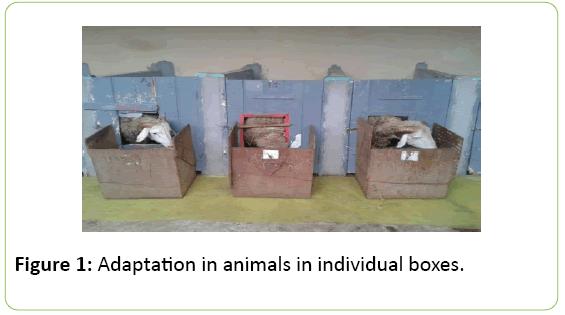 animalnutrition-Adaptation-animals
